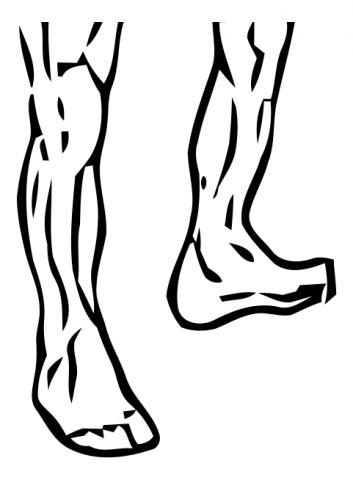 ankle-circles-medium-1