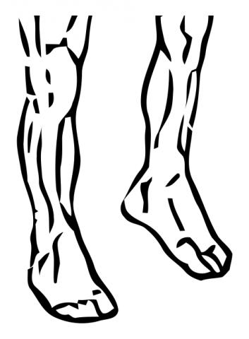 ankle-circles-medium-2
