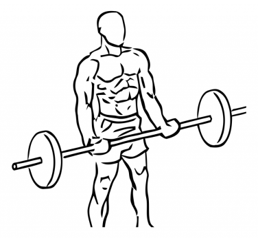 bicep-curls-with-barbell-large-1