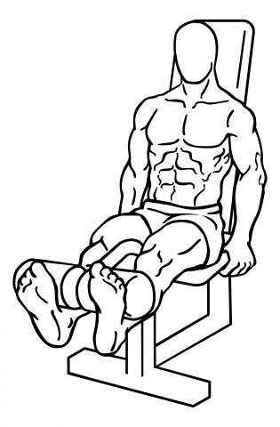 leg-extensions-medium-2
