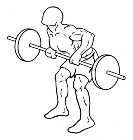 rear-deltoid-row-barbell-medium-2
