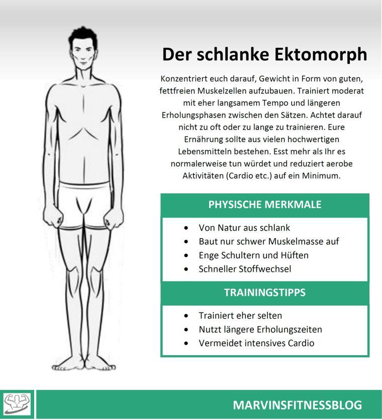 Ektomorph-Infografik