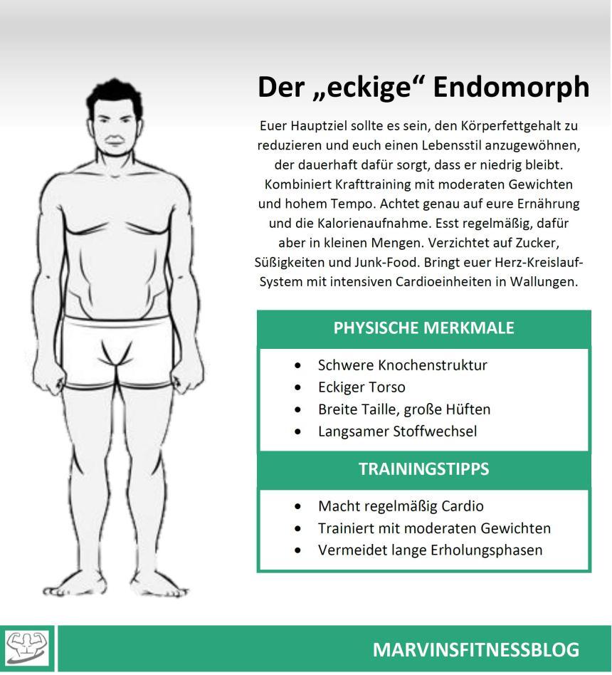 Endomorph-Infografik