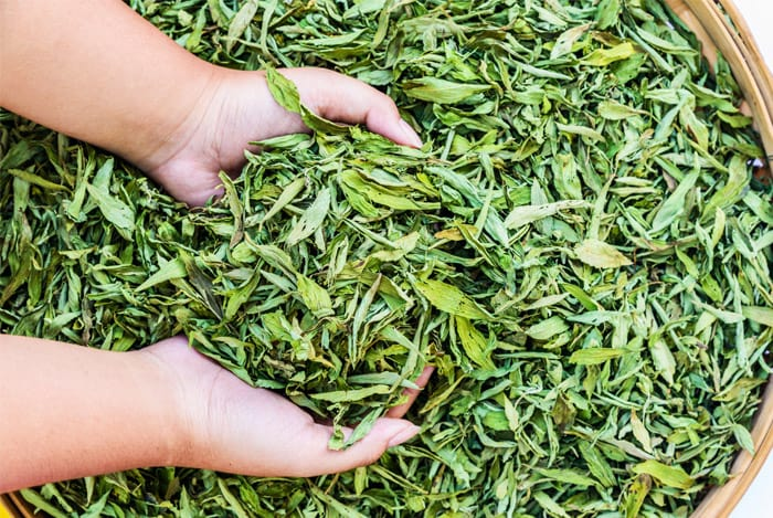 hand-dried-stevia-leaf
