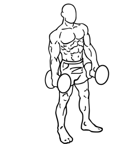 435px-Dumbbell-lateral-raises-2