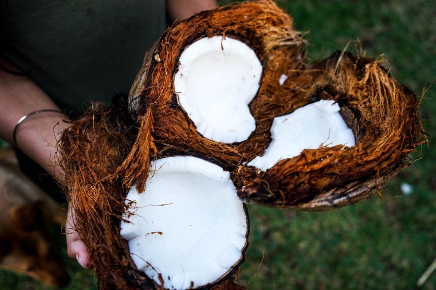 Natürliche-Kokosnüsse